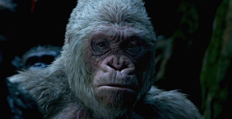 los simios