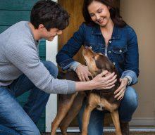 """""""Mis Huellas a Casa"""" : Amor incondicional entre un perro y su dueño"""